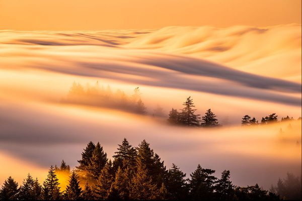 Foggy Day - Mount Tamalpais